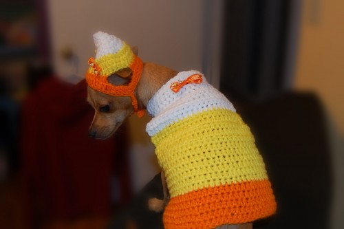 Candy Corn Dog Sweater and Hat Set for Halloween